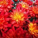 Des belles fleurs rougeâtre sauvages s'ouvrent à nous yeux.