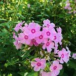 Des petites fleurs roses se manifestent comme un bouquet naturel au milieu d'un vert époustouflant !