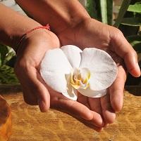 Bons cadeaux magiques au cabinet de Rita Oosterbeek. Offrir une orchidée c'est un symbole.