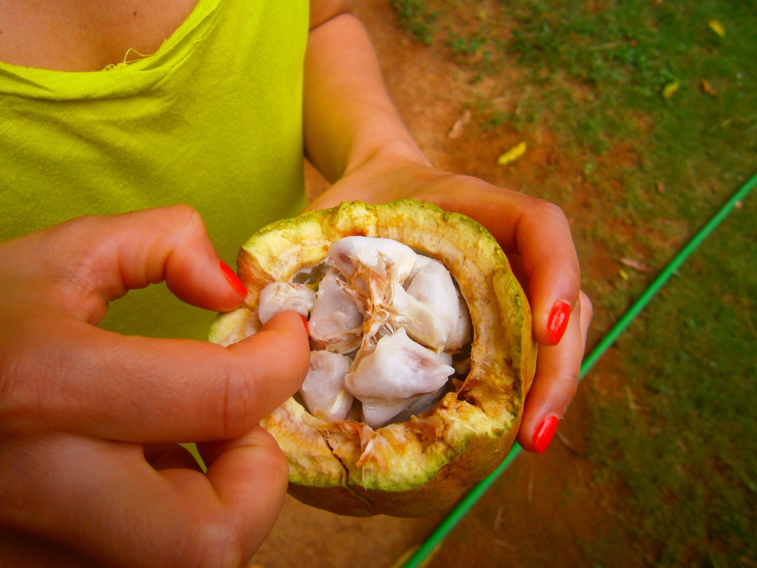 Cacao frais