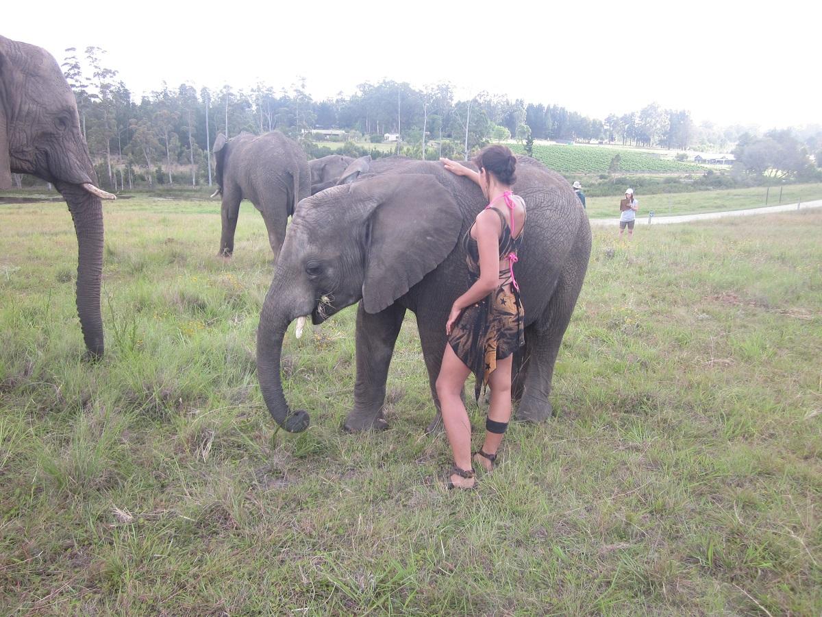 Ganesha, le dieux éléphant